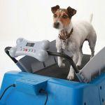 dog-treadmill-small