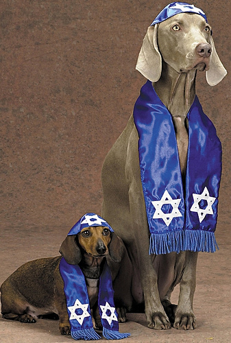 [Image: jewish-dog-pictuire1.jpg]