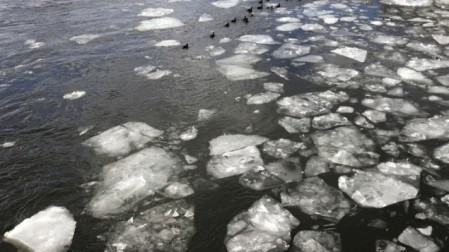 Illustrative photo of ducks on an icy lake (photo credit: Miriam Alster/Flash90)