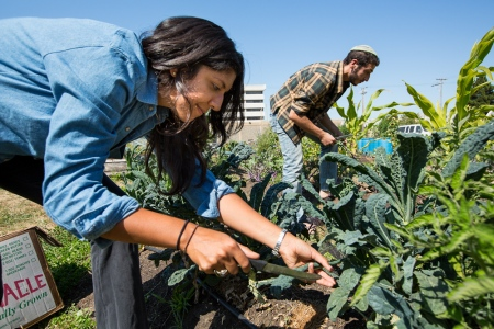 Urban Adamah fellow Laura Ruiz-Needleman (left) and Dani Friedenberg working on the farm (photo credit: Courtesy of Urban Adamah)
