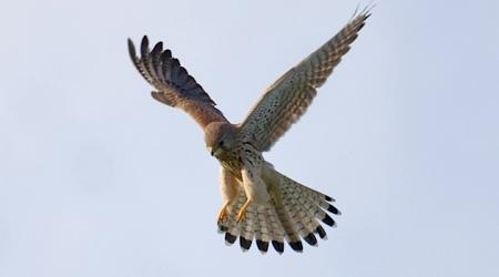 bird-879707